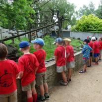 Sloebers & Ribbels - Olmense Zoo
